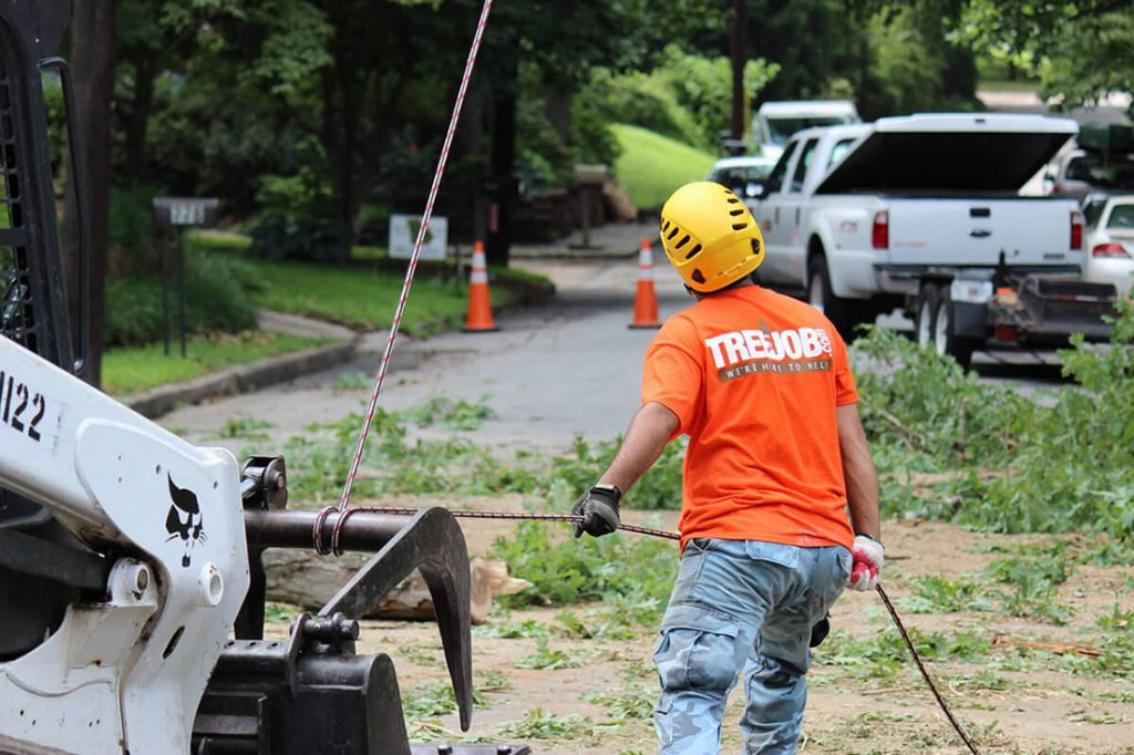 Arborist Consultations-Oceanside CA Tree Trimming and Stump Grinding Services-We Offer Tree Trimming Services, Tree Removal, Tree Pruning, Tree Cutting, Residential and Commercial Tree Trimming Services, Storm Damage, Emergency Tree Removal, Land Clearing, Tree Companies, Tree Care Service, Stump Grinding, and we're the Best Tree Trimming Company Near You Guaranteed!
