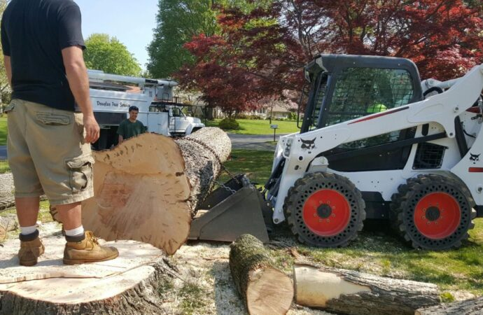 Camp Pendleton-Oceanside CA Tree Trimming and Stump Grinding Services-We Offer Tree Trimming Services, Tree Removal, Tree Pruning, Tree Cutting, Residential and Commercial Tree Trimming Services, Storm Damage, Emergency Tree Removal, Land Clearing, Tree Companies, Tree Care Service, Stump Grinding, and we're the Best Tree Trimming Company Near You Guaranteed!