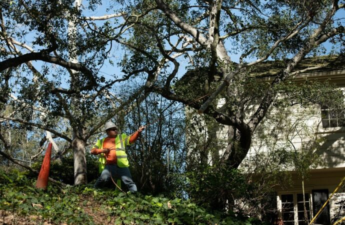 Carlsbad-Oceanside CA Tree Trimming and Stump Grinding Services-We Offer Tree Trimming Services, Tree Removal, Tree Pruning, Tree Cutting, Residential and Commercial Tree Trimming Services, Storm Damage, Emergency Tree Removal, Land Clearing, Tree Companies, Tree Care Service, Stump Grinding, and we're the Best Tree Trimming Company Near You Guaranteed!