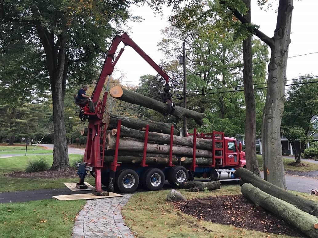 Commercial Tree Services-Oceanside CA Tree Trimming and Stump Grinding Services-We Offer Tree Trimming Services, Tree Removal, Tree Pruning, Tree Cutting, Residential and Commercial Tree Trimming Services, Storm Damage, Emergency Tree Removal, Land Clearing, Tree Companies, Tree Care Service, Stump Grinding, and we're the Best Tree Trimming Company Near You Guaranteed!