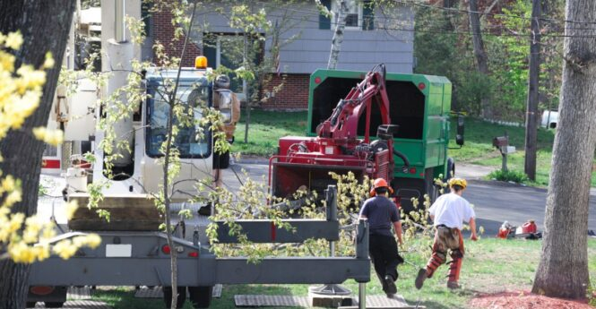 Contact-Us-Oceanside-CA-Tree-Trimming-and-Stump-Grinding-Services-We Offer Tree Trimming Services, Tree Removal, Tree Pruning, Tree Cutting, Residential and Commercial Tree Trimming Services, Storm Damage, Emergency Tree Removal, Land Clearing, Tree Companies, Tree Care Service, Stump Grinding, and we're the Best Tree Trimming Company Near You Guaranteed!