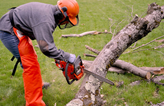 Emergency Tree Removal-Oceanside CA Tree Trimming and Stump Grinding Services-We Offer Tree Trimming Services, Tree Removal, Tree Pruning, Tree Cutting, Residential and Commercial Tree Trimming Services, Storm Damage, Emergency Tree Removal, Land Clearing, Tree Companies, Tree Care Service, Stump Grinding, and we're the Best Tree Trimming Company Near You Guaranteed!
