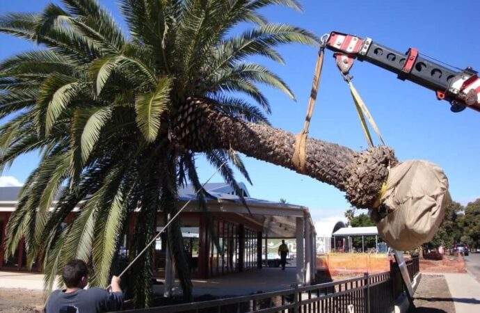 Palm Tree Removal-Oceanside CA Tree Trimming and Stump Grinding Services-We Offer Tree Trimming Services, Tree Removal, Tree Pruning, Tree Cutting, Residential and Commercial Tree Trimming Services, Storm Damage, Emergency Tree Removal, Land Clearing, Tree Companies, Tree Care Service, Stump Grinding, and we're the Best Tree Trimming Company Near You Guaranteed!