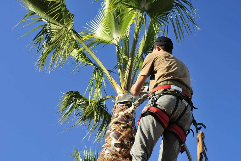 Palm Tree Trimming-Oceanside CA Tree Trimming and Stump Grinding Services-We Offer Tree Trimming Services, Tree Removal, Tree Pruning, Tree Cutting, Residential and Commercial Tree Trimming Services, Storm Damage, Emergency Tree Removal, Land Clearing, Tree Companies, Tree Care Service, Stump Grinding, and we're the Best Tree Trimming Company Near You Guaranteed!