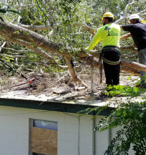 Storm Damage-Oceanside CA Tree Trimming and Stump Grinding Services-We Offer Tree Trimming Services, Tree Removal, Tree Pruning, Tree Cutting, Residential and Commercial Tree Trimming Services, Storm Damage, Emergency Tree Removal, Land Clearing, Tree Companies, Tree Care Service, Stump Grinding, and we're the Best Tree Trimming Company Near You Guaranteed!