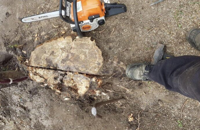 Stump Removal-Oceanside CA Tree Trimming and Stump Grinding Services-We Offer Tree Trimming Services, Tree Removal, Tree Pruning, Tree Cutting, Residential and Commercial Tree Trimming Services, Storm Damage, Emergency Tree Removal, Land Clearing, Tree Companies, Tree Care Service, Stump Grinding, and we're the Best Tree Trimming Company Near You Guaranteed!