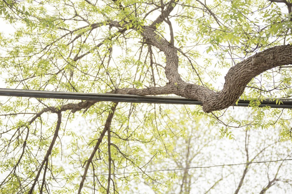 Tree-Bracing-Cabling-Oceanside CA Tree Trimming and Stump Grinding Services-We Offer Tree Trimming Services, Tree Removal, Tree Pruning, Tree Cutting, Residential and Commercial Tree Trimming Services, Storm Damage, Emergency Tree Removal, Land Clearing, Tree Companies, Tree Care Service, Stump Grinding, and we're the Best Tree Trimming Company Near You Guaranteed!
