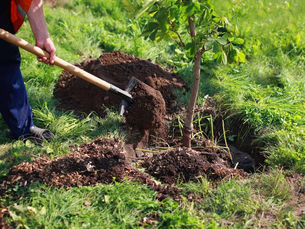 Tree Planting-Oceanside CA Tree Trimming and Stump Grinding Services-We Offer Tree Trimming Services, Tree Removal, Tree Pruning, Tree Cutting, Residential and Commercial Tree Trimming Services, Storm Damage, Emergency Tree Removal, Land Clearing, Tree Companies, Tree Care Service, Stump Grinding, and we're the Best Tree Trimming Company Near You Guaranteed!