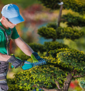 Tree Pruning-Oceanside CA Tree Trimming and Stump Grinding Services-We Offer Tree Trimming Services, Tree Removal, Tree Pruning, Tree Cutting, Residential and Commercial Tree Trimming Services, Storm Damage, Emergency Tree Removal, Land Clearing, Tree Companies, Tree Care Service, Stump Grinding, and we're the Best Tree Trimming Company Near You Guaranteed!