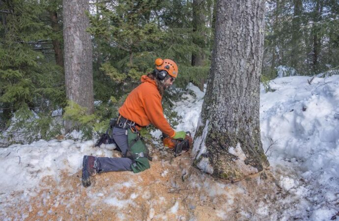 Tree Removal-Oceanside CA Tree Trimming and Stump Grinding Services-We Offer Tree Trimming Services, Tree Removal, Tree Pruning, Tree Cutting, Residential and Commercial Tree Trimming Services, Storm Damage, Emergency Tree Removal, Land Clearing, Tree Companies, Tree Care Service, Stump Grinding, and we're the Best Tree Trimming Company Near You Guaranteed!