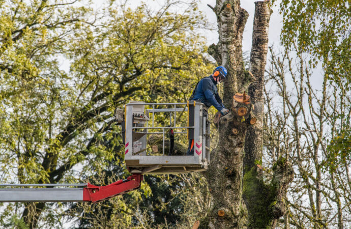 Tree Trimming-Oceanside CA Tree Trimming and Stump Grinding Services-We Offer Tree Trimming Services, Tree Removal, Tree Pruning, Tree Cutting, Residential and Commercial Tree Trimming Services, Storm Damage, Emergency Tree Removal, Land Clearing, Tree Companies, Tree Care Service, Stump Grinding, and we're the Best Tree Trimming Company Near You Guaranteed!