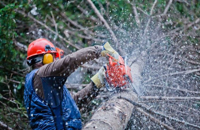 Vista-Oceanside CA Tree Trimming and Stump Grinding Services-We Offer Tree Trimming Services, Tree Removal, Tree Pruning, Tree Cutting, Residential and Commercial Tree Trimming Services, Storm Damage, Emergency Tree Removal, Land Clearing, Tree Companies, Tree Care Service, Stump Grinding, and we're the Best Tree Trimming Company Near You Guaranteed!
